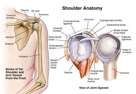 Rotator Cuff Questions And Answers Including Rotator Cuff Exercise