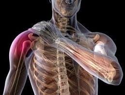 Torn Rotator Cuff Symptoms